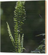 Lacy Wild Alabama Fern Wood Print