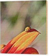 Lady Bug On A Flower Wood Print