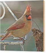 Lady Cardinal With Her Crown On Wood Print