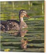 Lady Duck 1 Wood Print