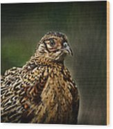 Lady Pheasant Wood Print