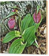 Lady Slipper I Wood Print