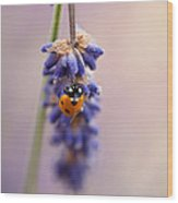Ladybird And Lavender Wood Print