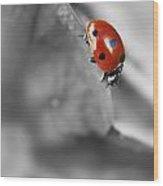 Ladybird On Leaf 1.0 Wood Print