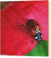Ladybird On Petal Wood Print