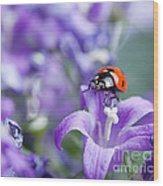 Ladybug And Bellflowers Wood Print