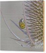 Ladybug Croosing The Prickles  Wood Print
