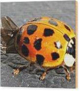 Ladybug Folding Wings Wood Print