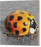 Ladybug In The Sun Wood Print