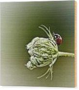 Ladybug Ladybug Fly Away Home Wood Print