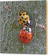 Ladybug Love Wood Print
