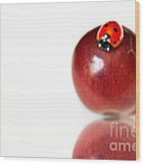 Ladybug On Grape Wood Print by Artist and Photographer Laura Wrede