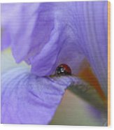 Ladybug On Iris Wood Print