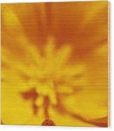 Ladybug On Poppy Flower Petal Wood Print