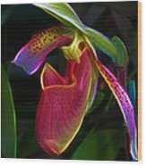 Lady's Slipper Wood Print by Judi Bagwell