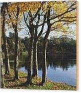 Lake And Trees, Mount Stewart, Co Down Wood Print