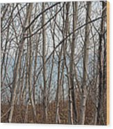 Lake Beyond The Trees Wood Print