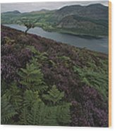 Lake District View From A Hillside Wood Print