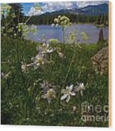 Lake Irwin Wildflowers Wood Print