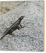 Lake Tahoe Lizard On A Hot Rock Wood Print