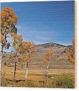 Lamar Valley Aspens Wood Print