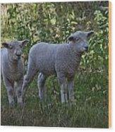 Lambs Wood Print