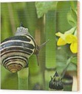 Land Snail 5698 Wood Print