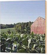 Landscape Soybean Field In Morning Sun Wood Print