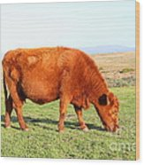 Landscape With Cow Grazing In The Field . 7d9933 Wood Print