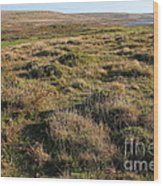 Landscape With Cow Grazing In The Field . 7d9942 Wood Print
