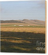 Landscape With Cows Grazing In The Field . 7d9966 Wood Print