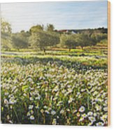 Landscape With Daisies Wood Print