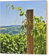 Landscape With Vineyard Wood Print