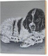 Landseer Pup Wood Print by Patricia Ivy