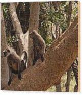 Langurs Sariska Wood Print