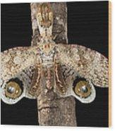 Lantern Bug Fulgora Laternaria Wood Print
