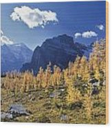 Larch Trees From The Saddleback Trail Wood Print