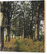 Larchill Arcadian Garden, County Wood Print