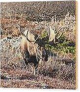 Large Bull Moose Wood Print