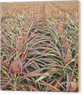 Large Field With Pineapples Wood Print