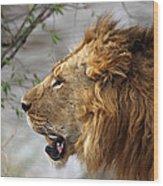 Large Male Lion Profile Portrait Wood Print