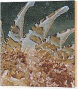 Large-scaled Scorpionfish Wood Print