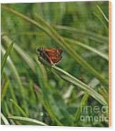 Large Skipper Butterfly Wood Print