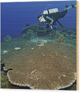 Large Staghorn Coral And Scuba Diver Wood Print