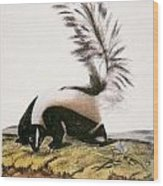 Large Tailed Skunk Wood Print