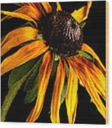 Last Day Of A Black-eyed Susan Wood Print