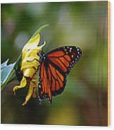 Last Kiss Of The Butterfly Wood Print