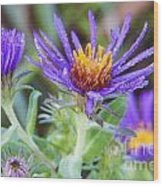 late Summer Fleabane Wood Print