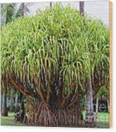 Lauhala Tree Wood Print