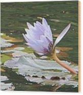 Lavendar Aqua Queen Wood Print